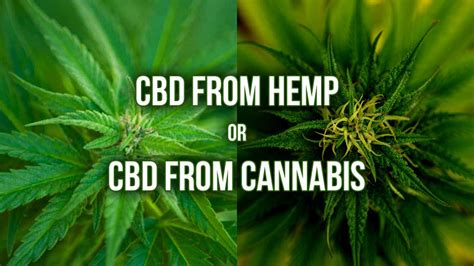 cbd and hemp using cbd hemp marijuana and cannabinoids for general health benefits a step by step guide books cbd from hemp or cbd from cannabis marijuana