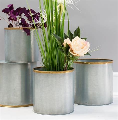 gold edged plant pots   forest
