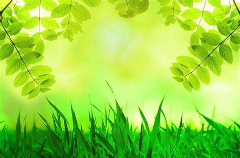 Daun Semi foto gratis musim semi daun hijau rumput gambar
