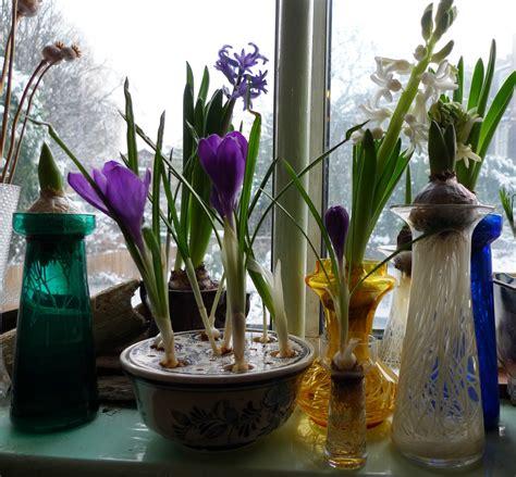 Crocus Bulb Vase by Bulb Bowl Garden Withindoors