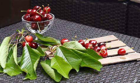diez ardillas la cereza cuatro motivos para consumir frutas y verduras de temporada