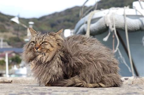 cat island in japan top 10 images of the cats of tashirojima island