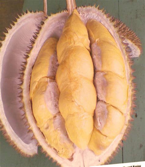 Harga Bibit Durian Bawor 2018 harga jual bibit durian musangking montong bawor murah