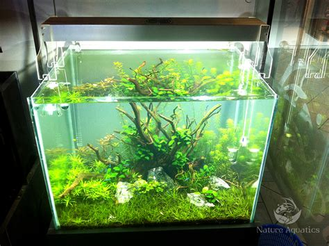 led aquarium lighting planted tank planted aquarium led lighting 1000 aquarium ideas