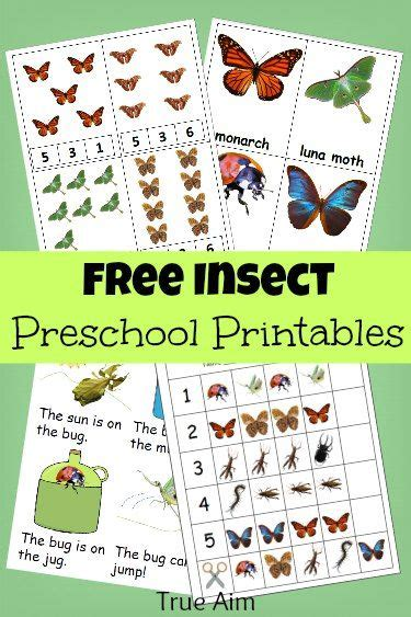 printable insect flash cards free preschool printables insect mini pack frees page