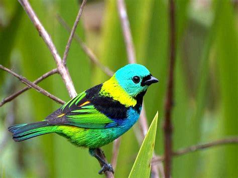 pinterest wallpaper birds sun shines colourful birds wallpaper birds pinterest