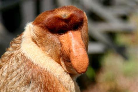 meet the world s ugliest endangered animals daily mail the ugliest endangered animals
