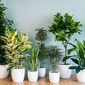 home plant decor tlc the tree and landscape company taking care of indoor