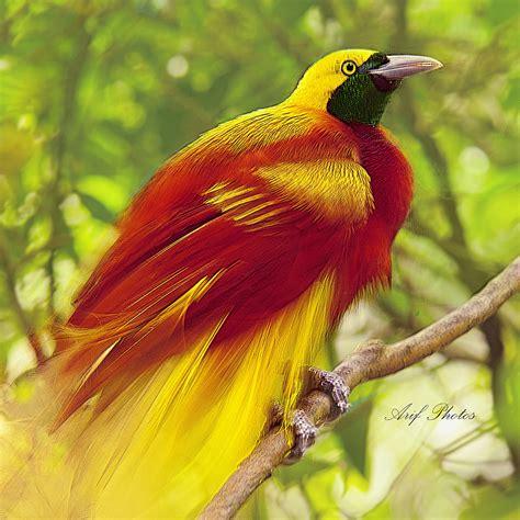 beautiful birds phots photo and lovely photos showcase of brilliantly colorful birds photography