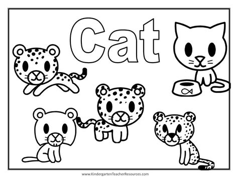 cat and coloring pages animal coloring pages