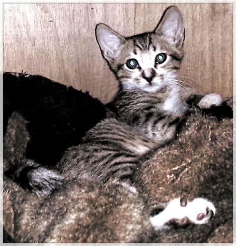 pound las vegas homeward bound cat adoptions animal shelters las vegas nv phone number yelp