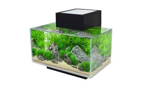 un acquario di design per arredare casa animali pucciosi
