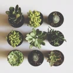 Cute Plants Cute Cacti Pastiche