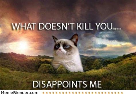 Acohol Doesn T Detox Poison by Grumpy Cat Meme Grumpy Cat Doesn T Want You And