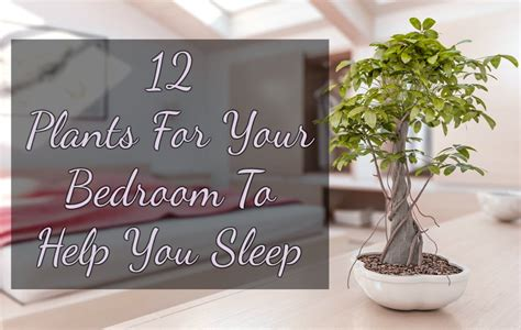 best plant to have in bedroom 12 plants for your bedroom to help you sleep iseeidoimake