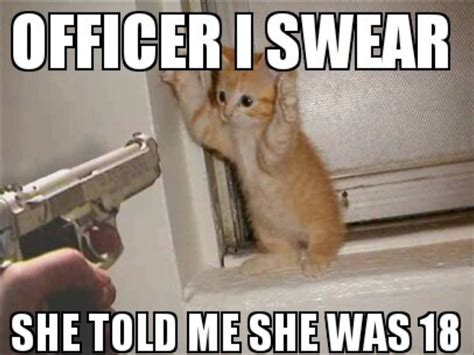 Funny Swearing Memes - 40 very funny cat meme pictures and images
