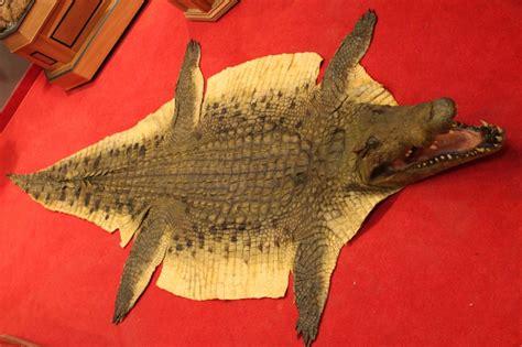 crocodile rug alligators and crocodiles taxidermy taxidermist in maryland