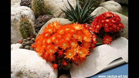 cactus rock garden garden ideas cactus rock garden ideas