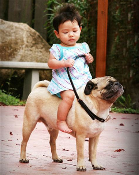 pugs with children pugs and children www pugs co uk