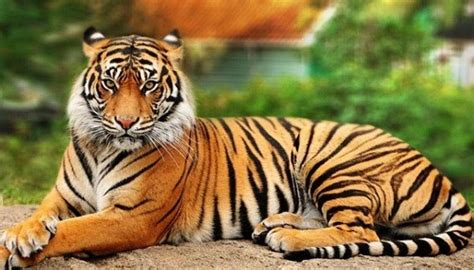 procrear en tigre 2016 tigre instituto c 233 u interior