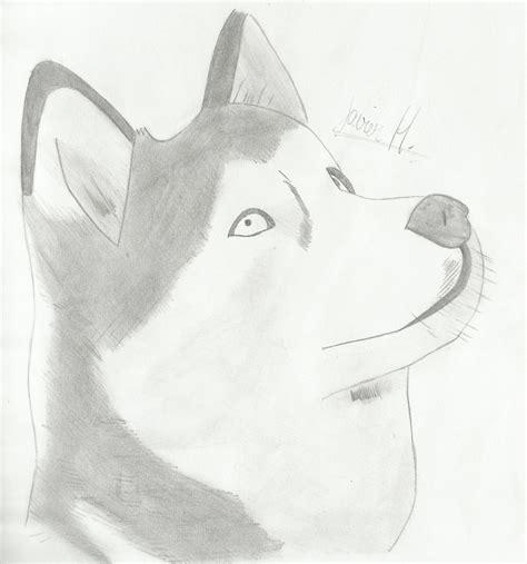 imagenes a lapiz para dibujar de animales dibujos y eso arte taringa