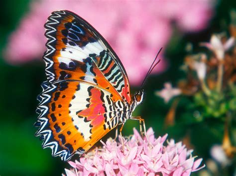 wallpaper for desktop butterfly butterfly desktop wallpapers funny photos funny mages
