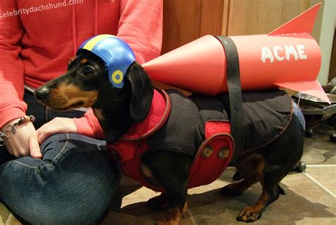 e in dogs superdog photo contest dachshund costumes hallowiener