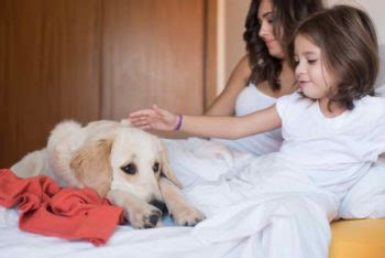how to comfort a dog during thunderstorms 9 ways to calm your dogs during thunderstorms total survival