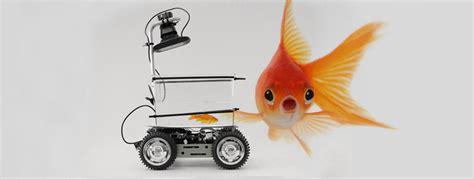 sulle ruote il ritorno pesce rosso in movimento cond 233 nast live