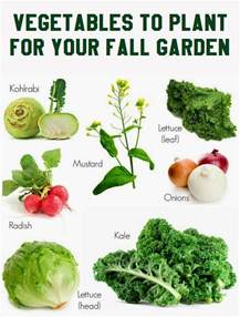 What To Grow In Fall Garden - vegetables to plant for your fall garden vegetable gardening 101 gardening