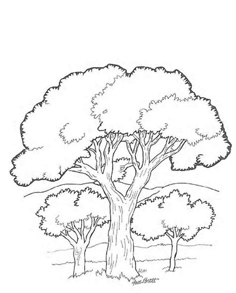 coloring pages tree coloring home