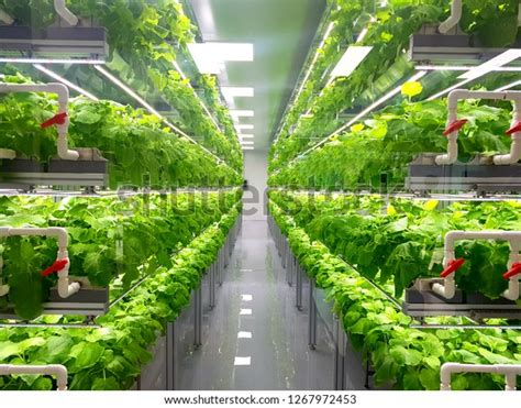 plant vertical farms producing plant vaccines stock photo
