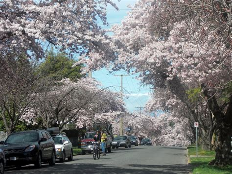 victoria weather climate february 2016