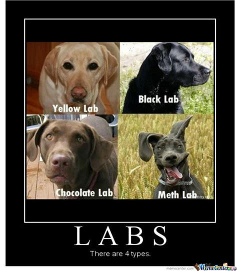 Labrador Meme - lab partners by trav2016 meme center