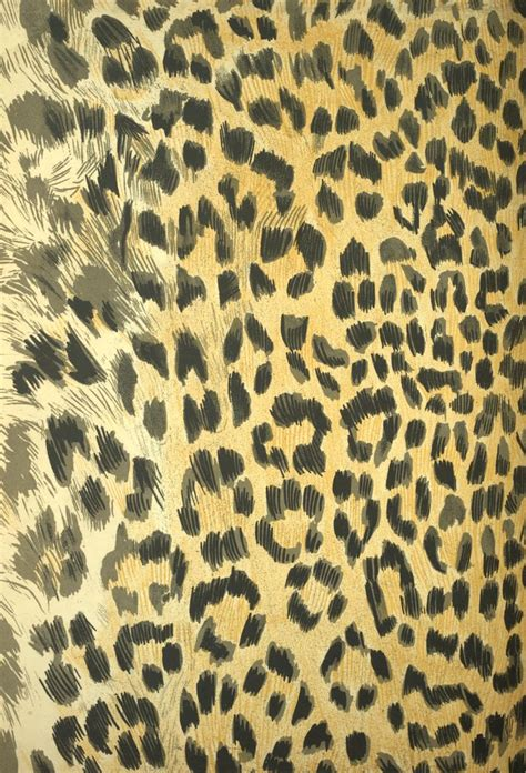 domain leopard image the graphics 127 best images about domain on