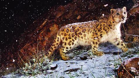 macbook pro 1 1 snow leopard 2560x1440 snow leopard flurries desktop pc and mac wallpaper