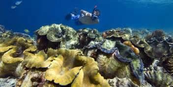 raja at dive resort snorkelling papua diving resorts raja at indonesia