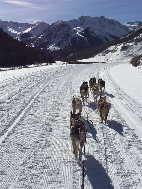 how are sled dogs trained sled central 2015 news archives