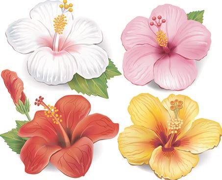 colored beautiful flowers design graphics vector flower beautiful flower vector free free vector download 17 370
