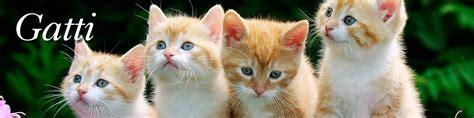 alimenti per gatti on line gatti emporio della natura
