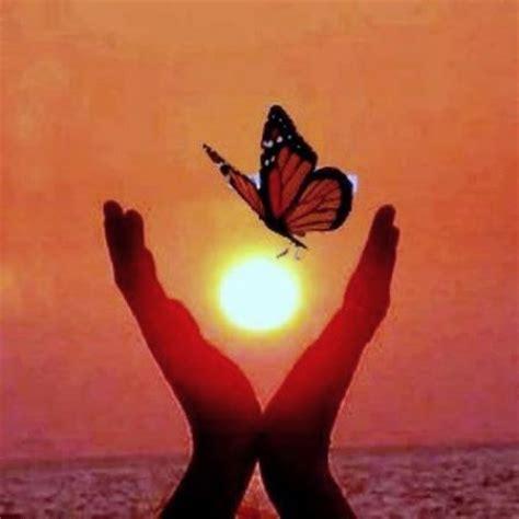 imagenes mariposas para facebook tximeletas por el mundo grupo tximeleta