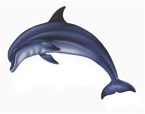 Backsplash Designs For Small Kitchen by Porcelain Bottlenosed Dolphin A Small