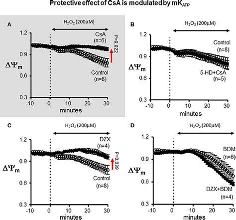 frontiers functional crosstalk between dendritic frontiers functional crosstalk between the mitochondrial