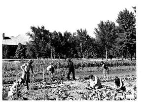 Victory Garden Ww2 by Growing More Than Food Significance Of Community Gardens