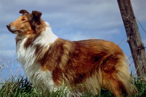 hundebilder  hundebilder hund tierbilder dog