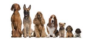 are your dogs looking for some fun courtney bend at