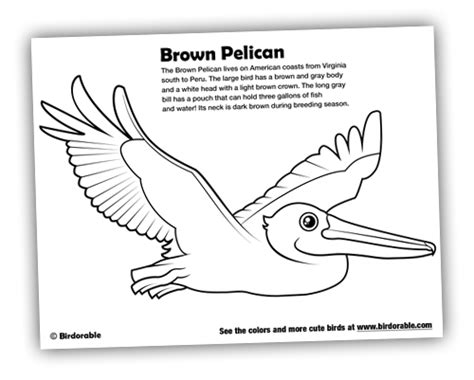 migratory birds coloring pages bird coloring pages
