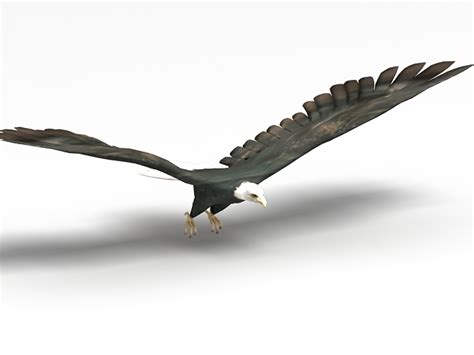 Kaos 3d Eagle Fly american bald eagle 3d model 3ds max files free modeling 29089 on cadnav