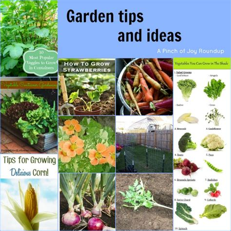 garden tips gardening a pinch of