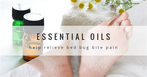 essential oils for bed bugs essential oils for bed bug bite treatment bedbug store